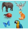 Animal Bug Polygon vector image vector image