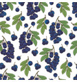 berries collection-05 vector image vector image
