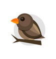 flat of colorful sparrow on white vector image
