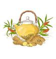 ginger tea vector image