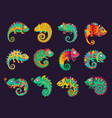 cartoon mexican chameleons lizards set vector image