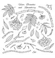 hand drawn set branches leaves and rowanberry vector image