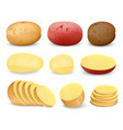 potato praties fried mockup set realistic style vector image vector image
