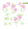set of peony flowers elements botanical vector image vector image