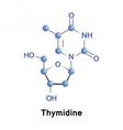 Thymidine pyrimidine deoxynucleoside vector image vector image