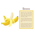 banana exotic juicy ripe yellow fruit berry poster vector image vector image