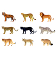 big cats set vector image