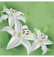 Floral vintage background green with flower lily vector image