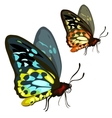 Beautiful colored tropical butterfly Insect vector image