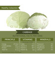 cabbage healthy collection vector image vector image