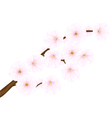 cherry tree branch blossoms vector image