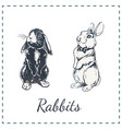 hand drawn rabbits isolated on white art vector image
