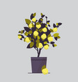 potted lemon plant growing fruit tree in pot vector image vector image