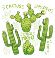 set of edible cactus or cacti for cinco de mayo vector image