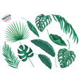tropical leaves realistic set vector image vector image
