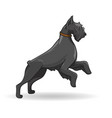 big black dog of breed rizenschnauzer vector image