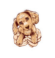 cute spaniel dog puppy in arms wall sticker vector image vector image