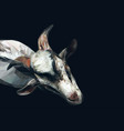 polygonal goat vector image vector image
