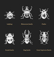 beetles on black background drawn vector image