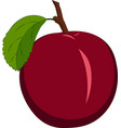 red plum isolated on white background vector image vector image