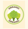 vegetables organic natural vector image vector image