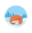 cute red fox lying on the background of winter vector image