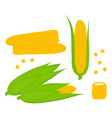set with corn on white background vector image
