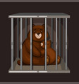 bear family in cage save animal
