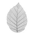 botanical series elegant single exotic leaf vector image