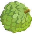 sweetsop isolated on white background vector image vector image