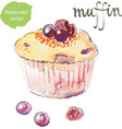 watercolor muffin vector image vector image