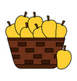 wicker basket with fresh mango vector image vector image