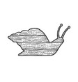 wooden snail silhouette sketch vector image