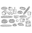 bread loafs bakery buns and baguettes vector image
