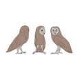 owl is worth drawing vector image vector image
