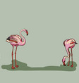 painted flamingo bird - vector image vector image