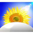 Peeking Sunflower Ornamental Design vector image vector image