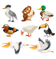 set bird character vector image