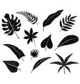 silhouettes of tropical leaves vector image vector image
