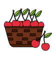 wicker basket with fresh cherries vector image vector image