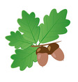 Acorns With Oak Leaves in Summer Isolated Objects vector image