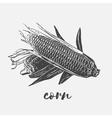 Corn cobs vegan vector image vector image