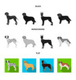 dog breeds black flat monochrome icons in set vector image vector image