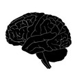 brain cartoon symbol icon design beautiful vector image