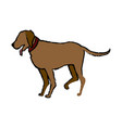 brown dog pet domestic animal vector image