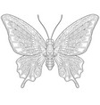 butterfly adult coloring page vector image