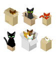 cat in box set pet in cardboard box vector image
