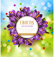 festive background with blue crocuses vector image vector image