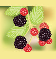 fresh blackberry fruits growing realistic vector image vector image