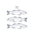 hand drawn of fish vector image vector image